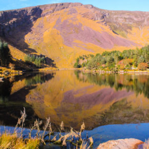 The site of the National Park is located at the foot of the Slieve Mish Mountains and covers an area of 450 hectares.