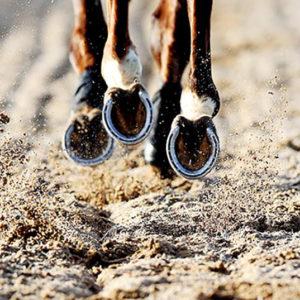 Horse hooves kicking up dirt