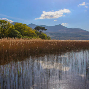Ross Island is a claw-shaped peninsula in Killarney National Park