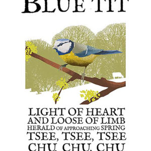 A4 or A3 print of the Blue Tit