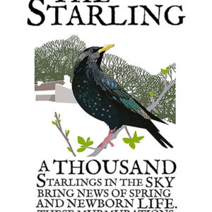 A4 or A3 print of the Starling