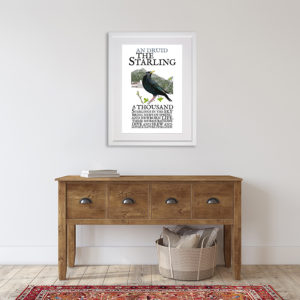 Birds of Ireland - The Starling. An Druid in room setting