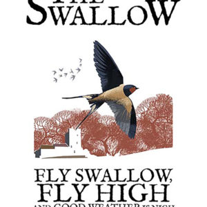 A4 or A3 print of the Swallow
