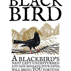 A4 or A3 print of the Blackbird