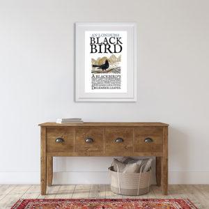 Birds of Ireland - The Blackbird. An Londubh in room setting