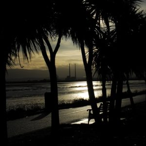 Clontarf Palm trees view