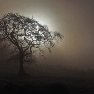 Tree through the fog Rathgorragh