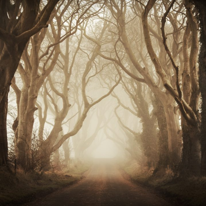 This tree lined avenue in Northern Ireland is known as The Dark Hedges. This mysterious lane concealed in fog seems to be lifted from another time.