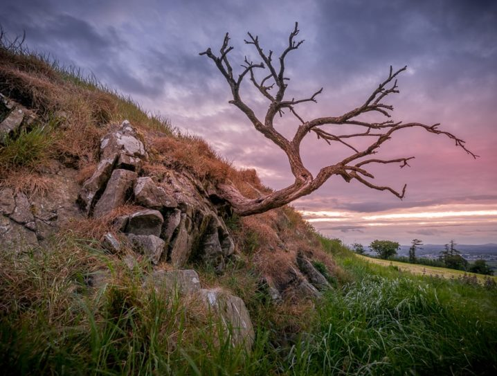 These Hawthorn trees are associated with the Fairys in Ireland. This is one of many growing around Loughcrew.